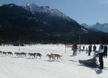 Schlittenhunderennen-Wallgau-08-03-2015 (25)