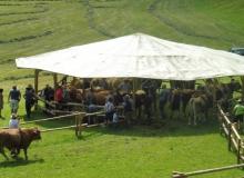 Ochsenrennen-2016-07-30-zweites-Training (13)