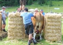 Ochsenrennen-2016-07-30-zweites-Training (26)