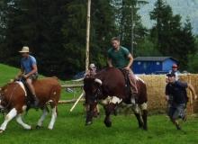 Ochsenrennen-2016-07-30-zweites-Training (42)