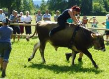 Ochsenrennen-2016-07-30-zweites-Training (58)