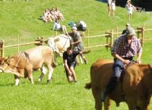 Ochsenrennen-2016-07-30-zweites-Training (73)