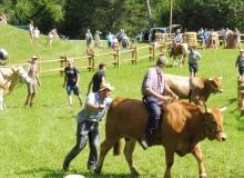 Ochsenrennen-2016-07-30-zweites-Training (76)