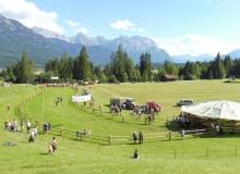 Ochsenrennen-2016-07-30-zweites-Training (78)