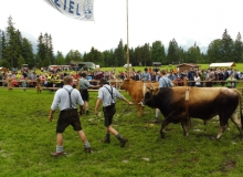 2016-08-06-Ochsenrennen-Wallgau (101)
