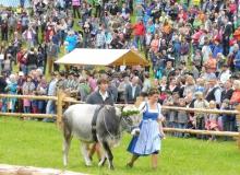2016-08-06-Ochsenrennen-Wallgau (23)