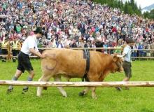2016-08-06-Ochsenrennen-Wallgau (30)