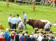 2016-08-06-Ochsenrennen-Wallgau (64)