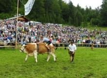 2016-08-06-Ochsenrennen-Wallgau (78)