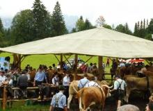 2016-08-06-Ochsenrennen-Wallgau (92)