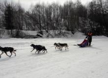 Schlittenhunderennen am 24. und 25.02.2018 in Wallgau. Die haben ja noch ihre Hausschuhe an.