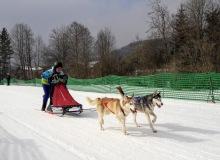 Schlittenhunderennen am 24. und 25.02.2018 in Wallgau. Immer schön geduckt, das ist gut für den cw-Wert