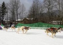 Schlittenhunderennen am 24. und 25.02.2018 in Wallgau. Nur nicht auf die Zunge beißen