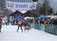 Schlittenhunderennen am 24. und 25.02.2018 in Wallgau. Ein Hund eine Frau vor dem Start