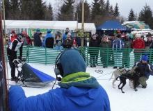 Schlittenhunderennen am 24. und 25.02.2018 in Wallgau. Ein Teletubbie zählt den Countdown