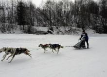 Schlittenhunderennen am 24. und 25.02.2018 in Wallgau. Im gestreckten Hundsgalopp Richtung Ziel.