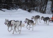 Schlittenhunderennen am 24. und 25.02.2018 in Wallgau. Gleich im Ziel