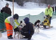 Schlittenhunderennen am 24. und 25.02.2018 in Wallgau. Das habt ihr fein gemacht, die Hunde werden in Empfang genommen.