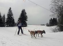 Schlittenhunderennen am 24. und 25.02.2018 in Wallgau. Startnummer 17 auf der Strcke.