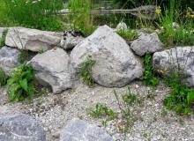 2018-05-31-Teich-Wallgau (4)