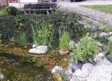 2018-05-31-Teich-Wallgau (6)