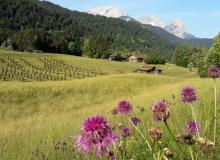 Bergwiese am Gstoag vor Wettersteingebirge