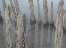 Alte Pfosten im Walchensee