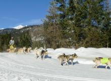 Schlittenhunderennen Wallgau 2019 (16)