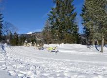 Schlittenhunderennen 2019 Wallgau