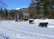 Schlittenhunderennen Wallgau 2019 (10)
