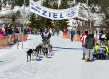 Schlittenhunderennen Wallgau 2019 (27)