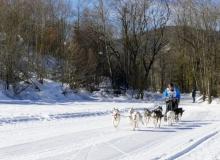 Schlittenhunderennen Wallgau 2019 (29)