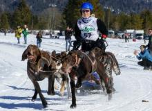 Schlittenhunderennen Wallgau 2019 (42)