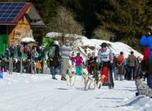 Schlittenhunderennen Wallgau 2019 (49)