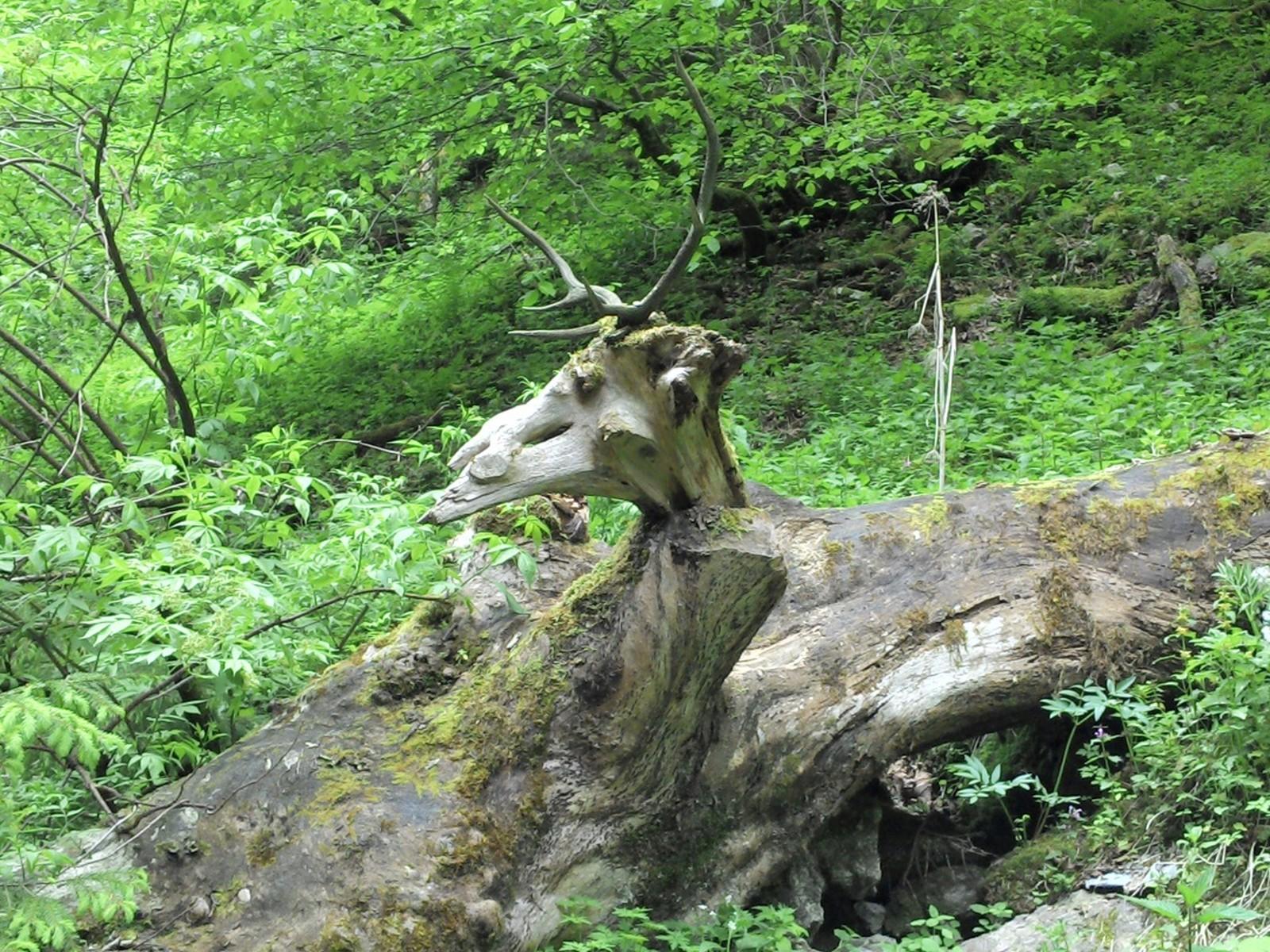 Fabelwesen aus den Wäldern um Wallgau