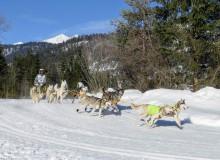 Schlittenhunderennen 2019 in Wallgau