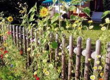 Lebender Gartenzaun