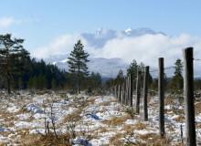 Isarau unterhalb von Wallgau mit Aussicht auf das Wettersteingebirge